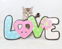Paz e amor Fotografia de Stock Royalty Free