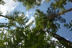 Paz e floresta calma Imagem de Stock Royalty Free