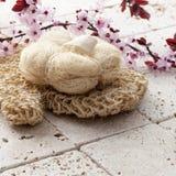 Paz interna para el rejuvenecimiento de la piel con las flores de cerezo Imágenes de archivo libres de regalías