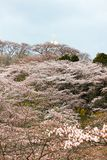 A paz Kannon de Funaoka e as árvores de cereja no cume do castelo de Funaoka arruinam o parque, Shibata, Miyagi, Tohoku, Japão Fotografia de Stock Royalty Free