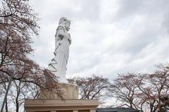 A paz Kannon de Funaoka e as árvores de cereja no cume do castelo de Funaoka arruinam o parque, Shibata, Tohoku, Japão Imagem de Stock