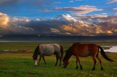 Paz nos prados Fotografia de Stock