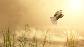 Paz (sensación de la paz de la emoción de la demostración de la imagen de imagen del concepto) Imagen de archivo libre de regalías