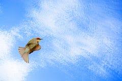 Paz (sensación de la paz de la emoción de la demostración de la imagen de imagen del concepto) Foto de archivo libre de regalías