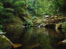 paz verde, sonhos escondidos Imagem de Stock Royalty Free