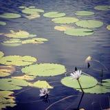 Paz y serenidad Fotos de archivo libres de regalías