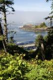 Pazifikküstenebel Stockbilder