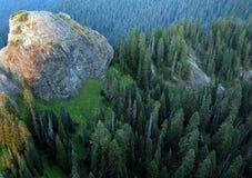 Pazifische Nordwest-Douglas Fir-Bäume Lizenzfreies Stockbild