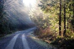 Pazifische Nordwest-Douglas Fir-Bäume Lizenzfreie Stockfotos