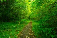 Pazifischer Nordwest-Forest Trail stockfoto