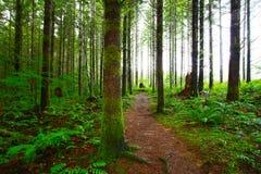Pazifischer Nordwest-Forest Trail stockbilder