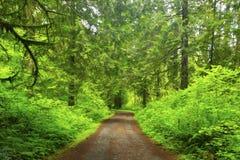 Pazifischer Nordwest-Forest Trail lizenzfreie stockfotografie