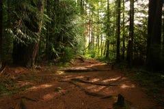 Pazifischer Nordwest-Forest Trail stockbild