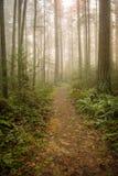 Pazifischer Nordwestwald auf einem nebeligen Morgen Lizenzfreie Stockfotos
