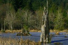 Pazifischer Nordwestwald und Süßwassersee lizenzfreies stockbild