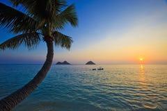 Pazifischer Sonnenaufgang mit Palme stockbilder