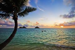 Pazifischer Sonnenaufgang mit Palme lizenzfreie stockbilder