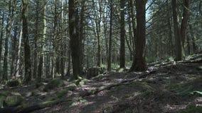 Pazifisches Nordwestmoos und Bäume 4K UHD stock video footage
