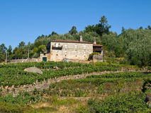 Pazo de Lentille. Nobility typical rural construction in Galicia, surrounded by vineyards Royalty Free Stock Photos