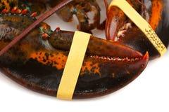 Pazury żywy homar zdjęcia royalty free