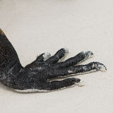 Pazury morska iguana obrazy stock