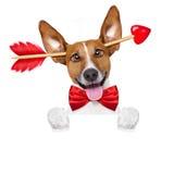 Pazzo nel cane dei biglietti di S. Valentino di amore immagine stock libera da diritti