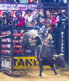 PBR bull riding world finals Royalty Free Stock Photo