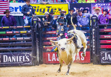 PBR bull riding world finals Stock Image