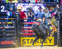 PBR bull riding world finals Stock Photography