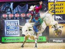 PBR bull riding world finals Royalty Free Stock Photography