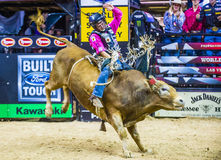 PBR bull riding world finals stock photo