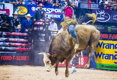 PBR bull riding world finals Stock Images