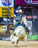 PBR byka jeździeccy światowi finały Fotografia Royalty Free