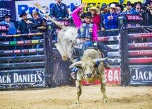 PBR byka jeździeccy światowi finały Zdjęcia Royalty Free