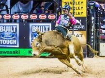 PBR byka jeździeccy światowi finały Obraz Royalty Free