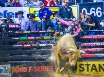 PBR byka jeździeccy światowi finały Zdjęcie Royalty Free