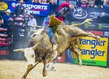 PBR byka jeździeccy światowi finały Obraz Stock
