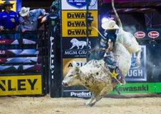 PBR byka jeździeccy światowi finały Zdjęcia Stock