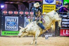PBR byka jeździeccy światowi finały Obrazy Stock