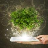 PC de la tableta del control de la mano con el árbol verde mágico Fotos de archivo libres de regalías