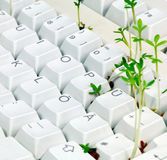 Pc keyboard, green IT Stock Photos