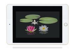 PC van de tablet Royalty-vrije Stock Foto's