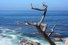 PCH_Tree Photo stock