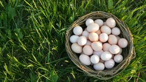 Pcturesque scene of large homemade chicken eggs with a hand-made wicker nest on the green grass in the rays of the sun. Picturesque scene of large homemade stock video footage
