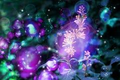 pączkuje lilą magię Fotografia Royalty Free