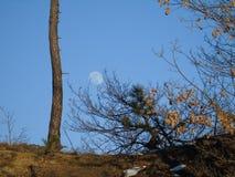 Pełny blask księżyca dniem w zimie obrazy royalty free