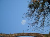 Pełny blask księżyca dniem w zimie zdjęcia stock