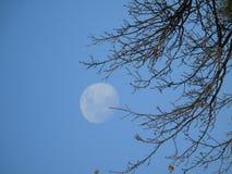 Pełny blask księżyca dniem w zimie zdjęcie royalty free