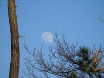 Pełny blask księżyca dniem w zimie zdjęcia royalty free