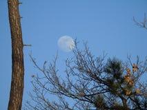 Pełny blask księżyca dniem w zimie obraz stock
